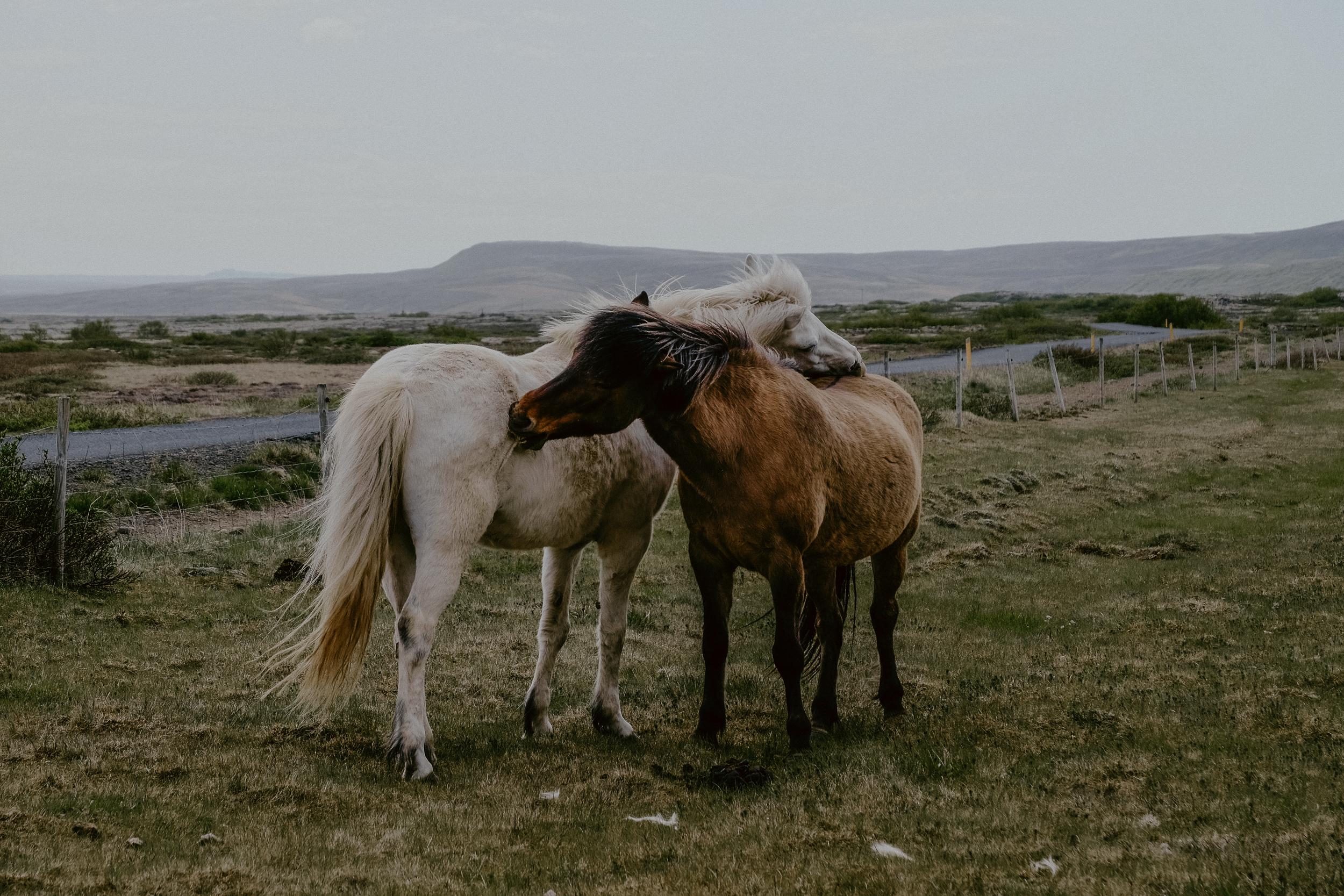 Iceland-397.jpg