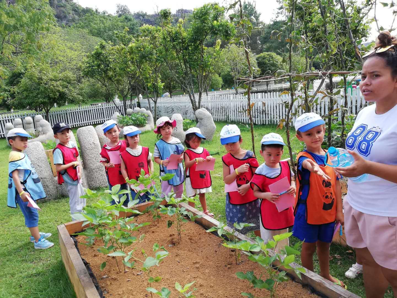 Eco-garden activity.jpg