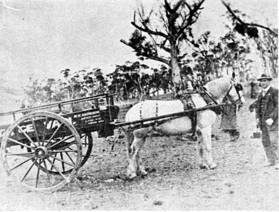 Transport provided by Harrisons of Battery Point. Two of the family have trees, 27/7/1918.  [Weekly Courier 1st August July 1918 p19]