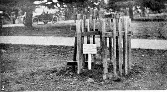 Tree planted for Pte Gibson.  [Weekly Courier 8th August 1918 p23]