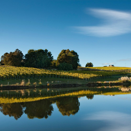 Our vineyard - Whenua Matua