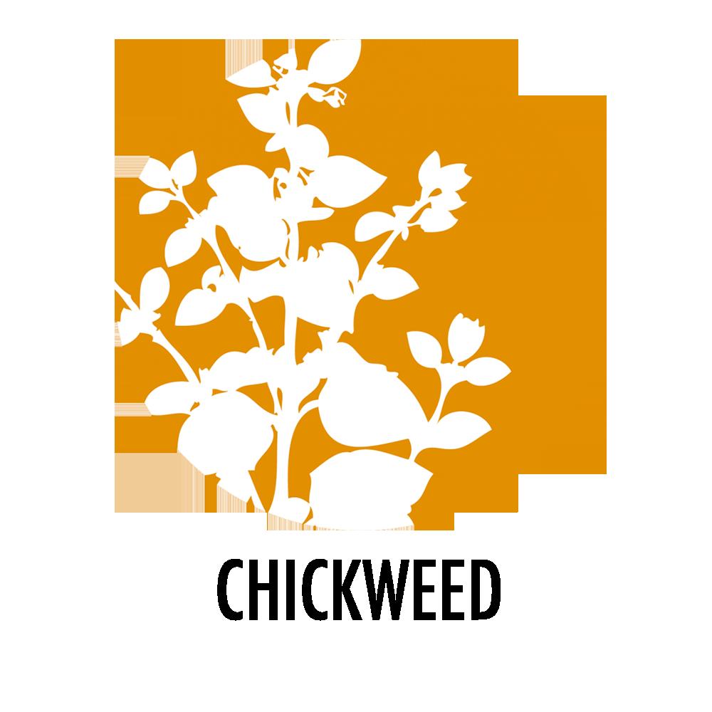 chickweed bee propolis corigem.png