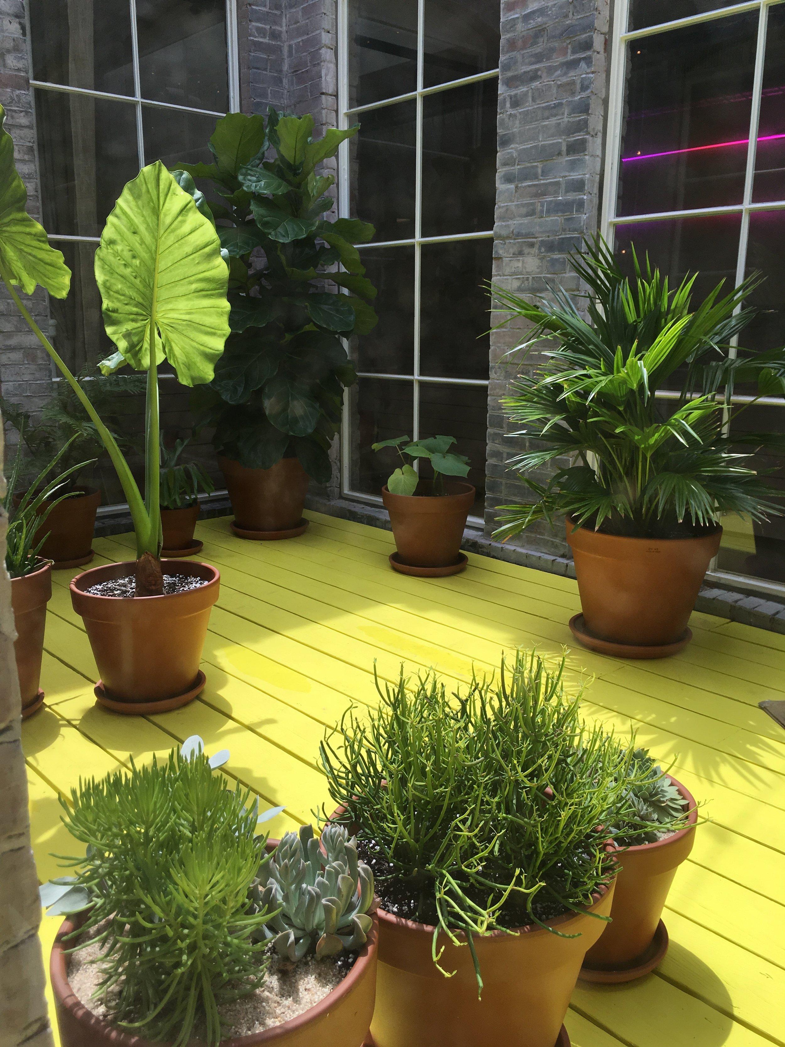 Indoor Plantscaping