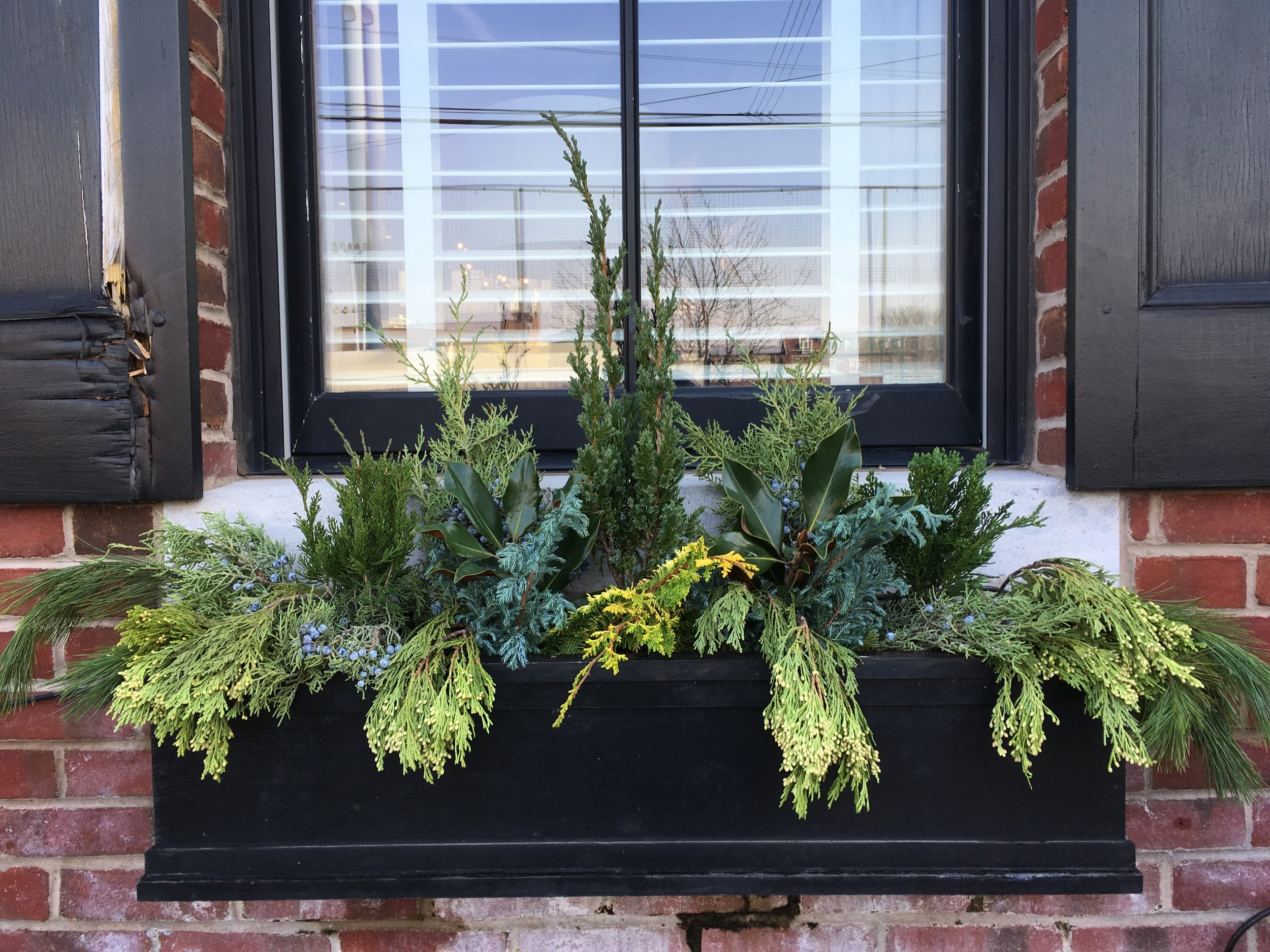 "A winter planting filed with ""Windowbox Babies"" and evergreen cuttings.  This planting will carry you from late fall through early spring."