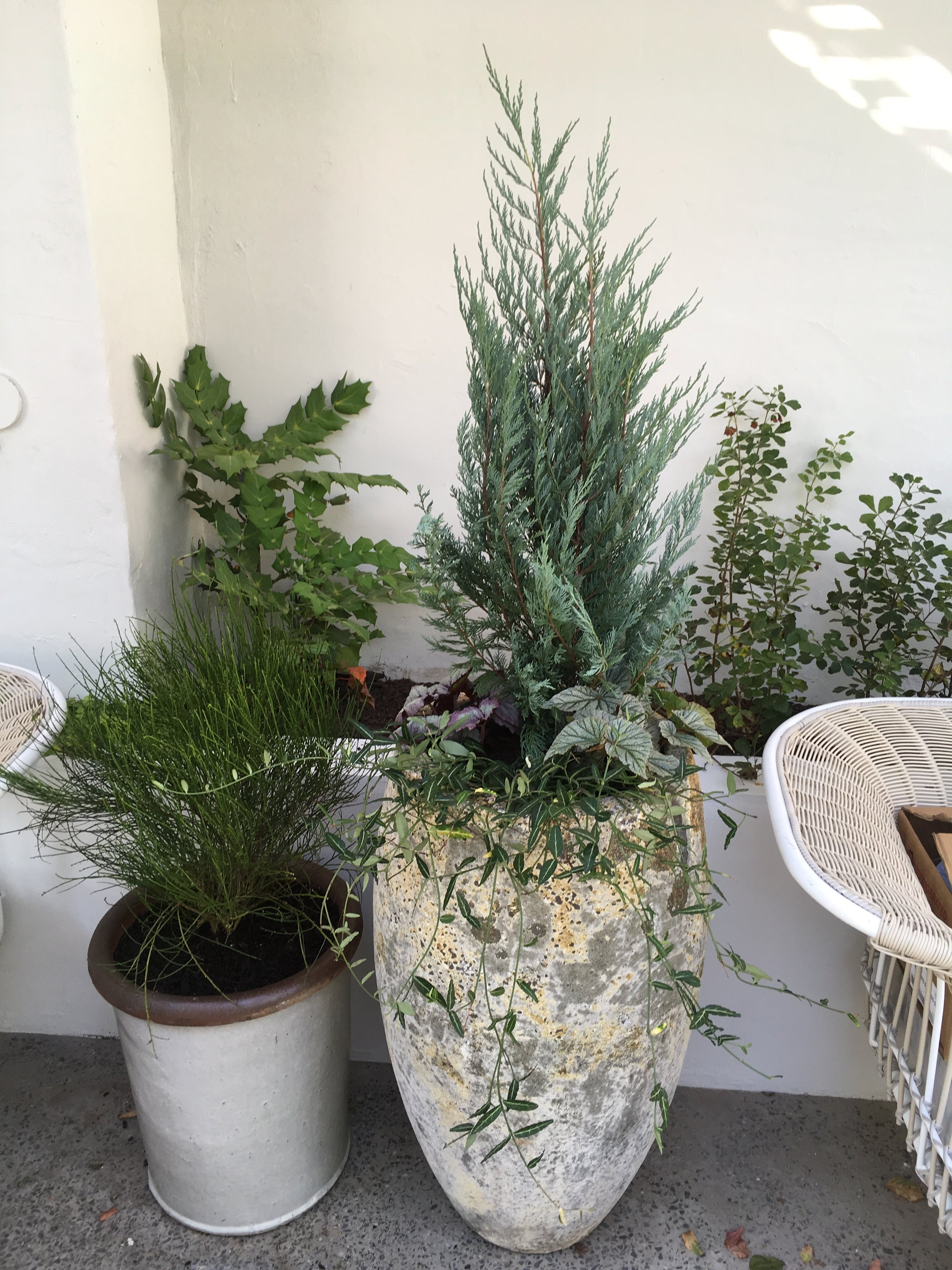 Suraya, the garden