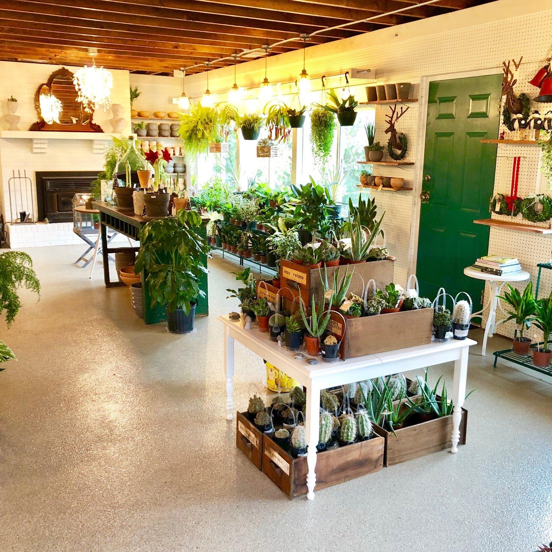 A Garden Center Indoor Plant