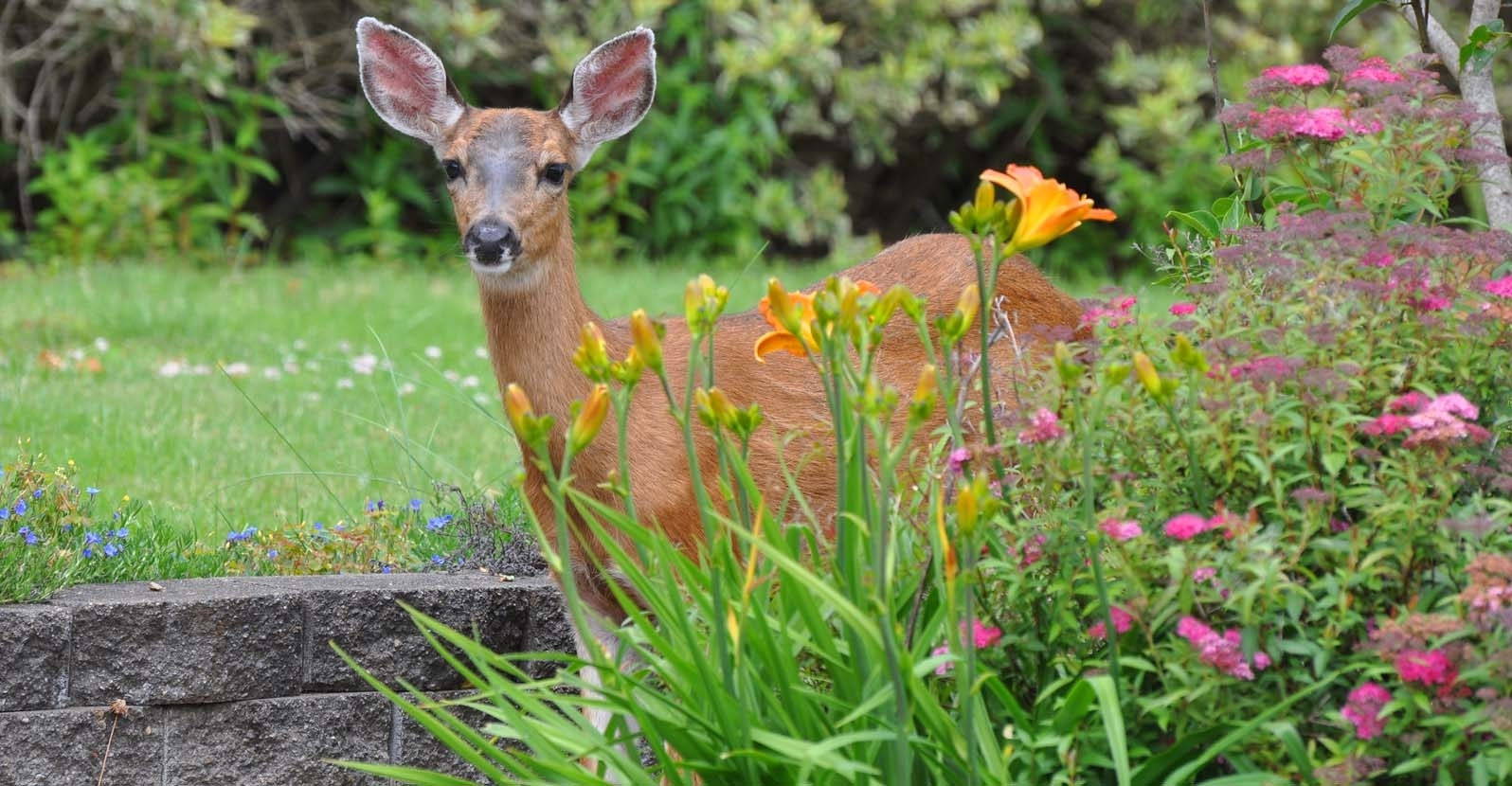 Growing Deer Resistant Plants