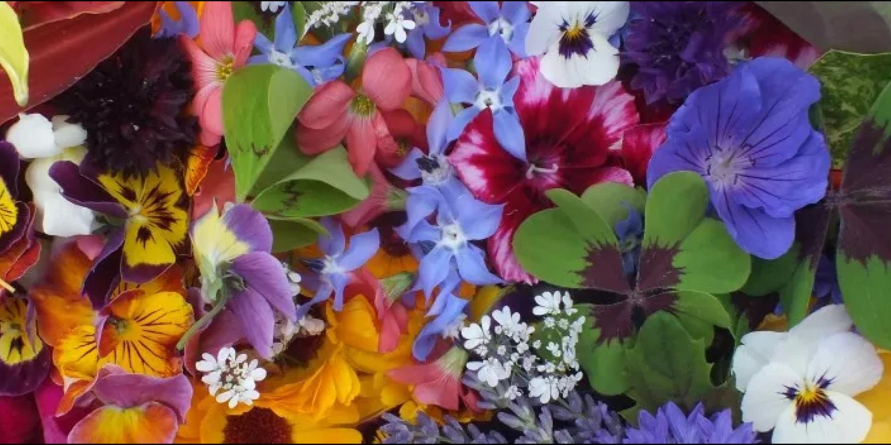 grow-edible-flowers.png