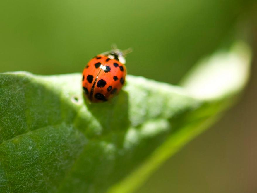 Growing With Ladybugs