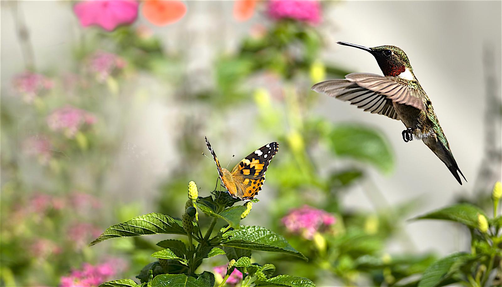 perennials-for-hummingbirds-and-butterflies.jpg