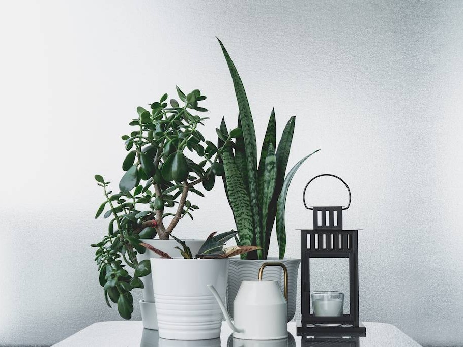 Indoor House Plants To Help Air Quality