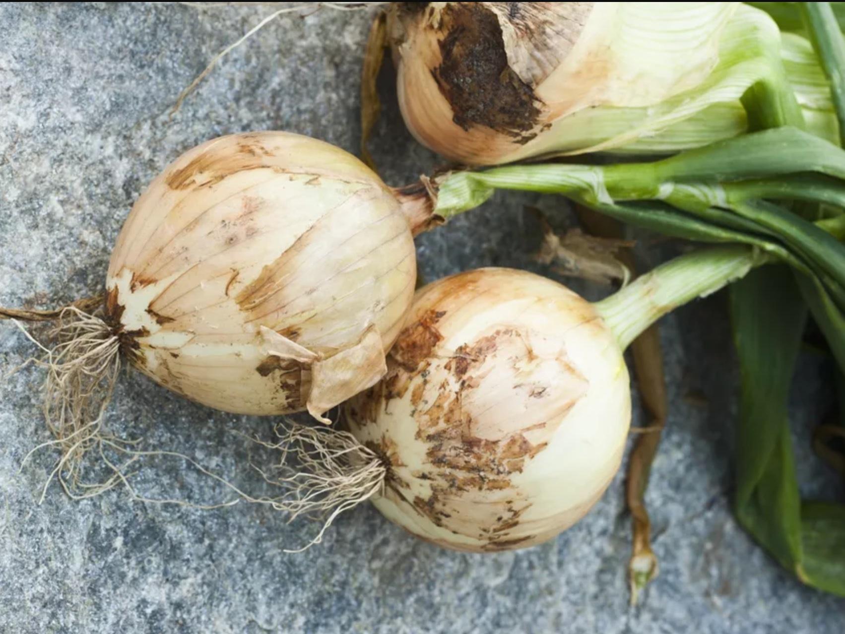 Growing Sweet Onions
