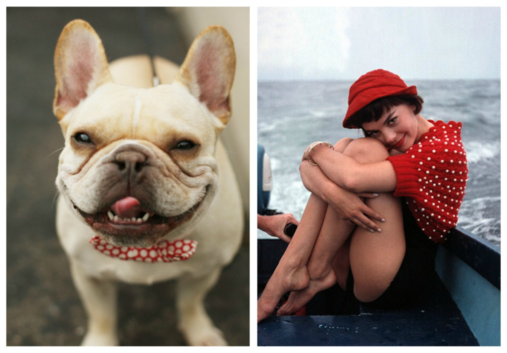 collage of a dog and a woman wearing polkadot accessories