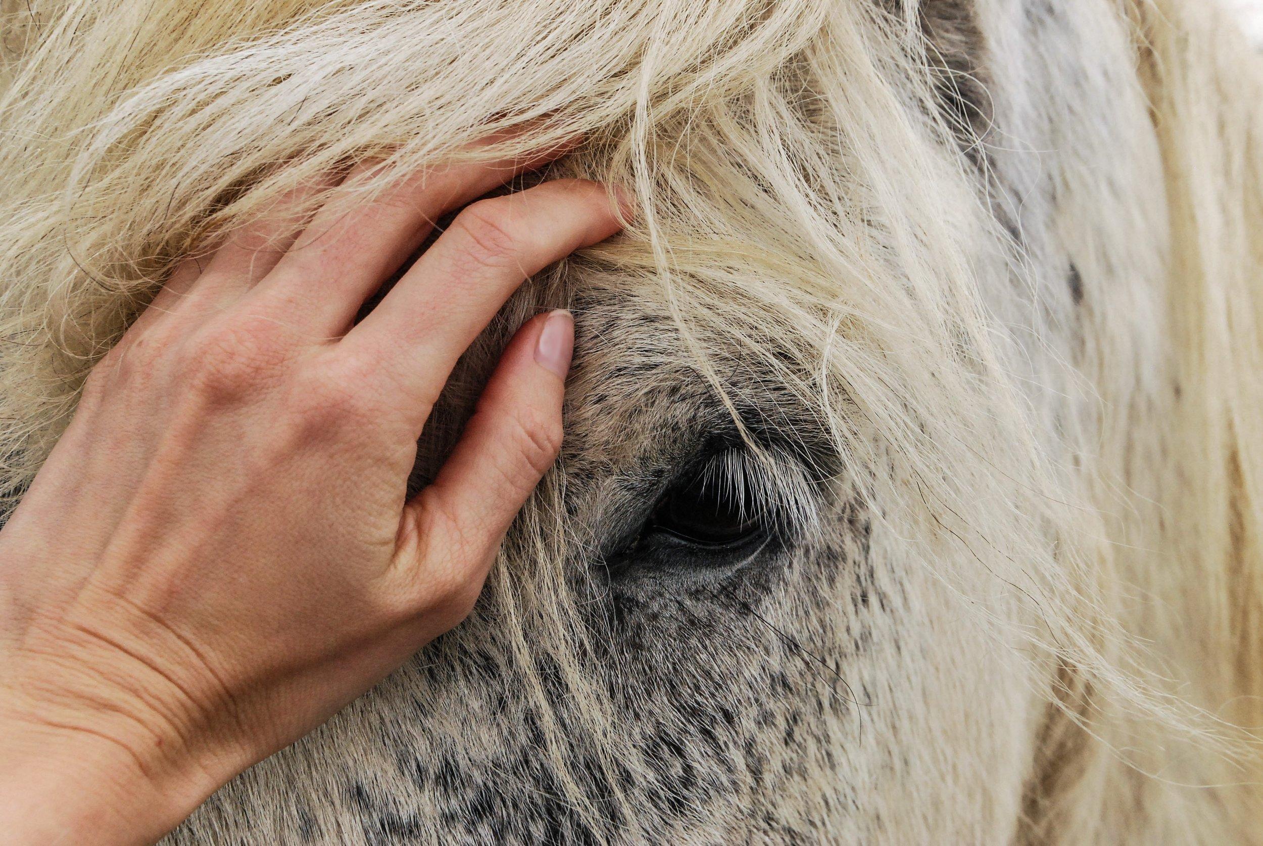 adorable-affection-animal-614521.jpg
