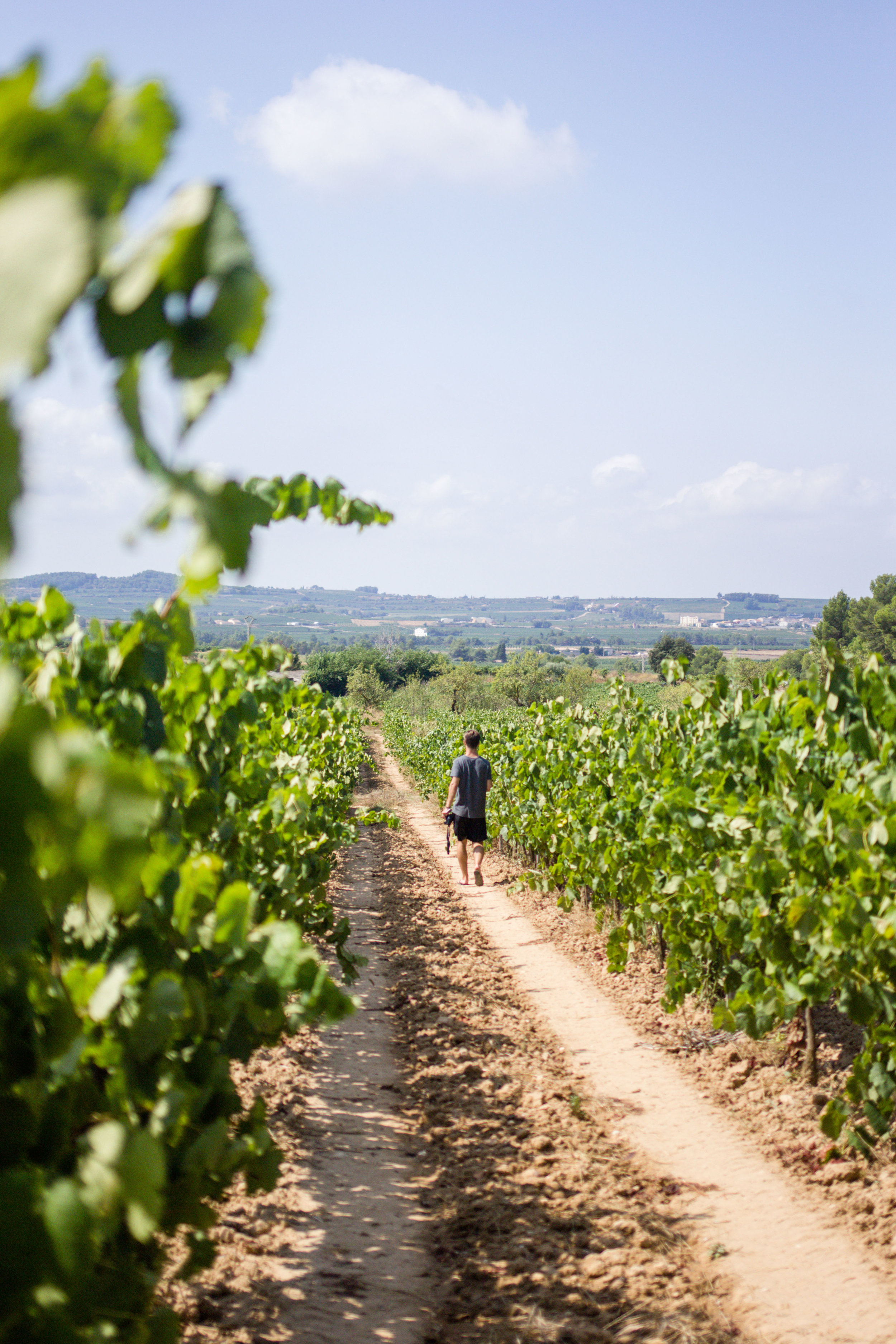 Person taking a walk in the vineyard on a sunny day