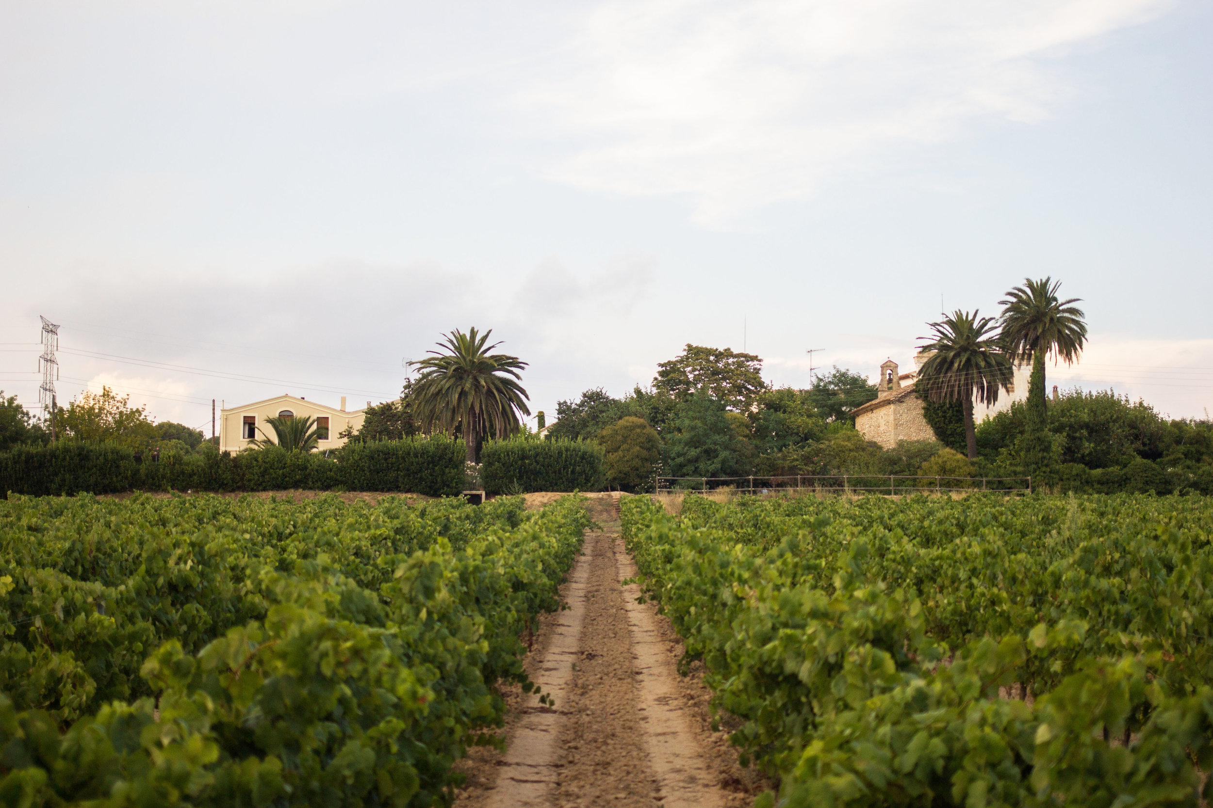 A dirt road through the vineyard leading up to Mas Palou