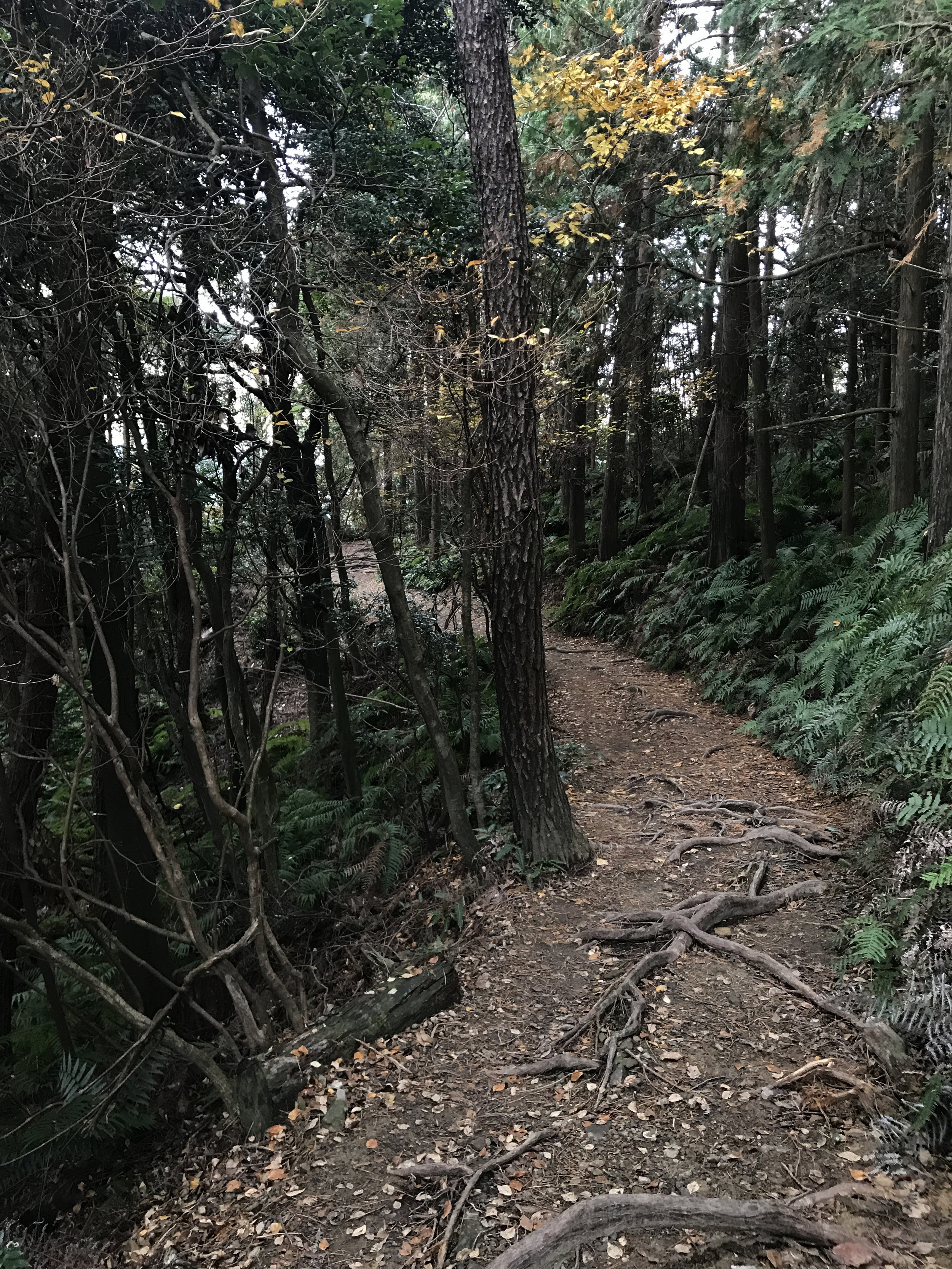 The trail looks like this most of the time.