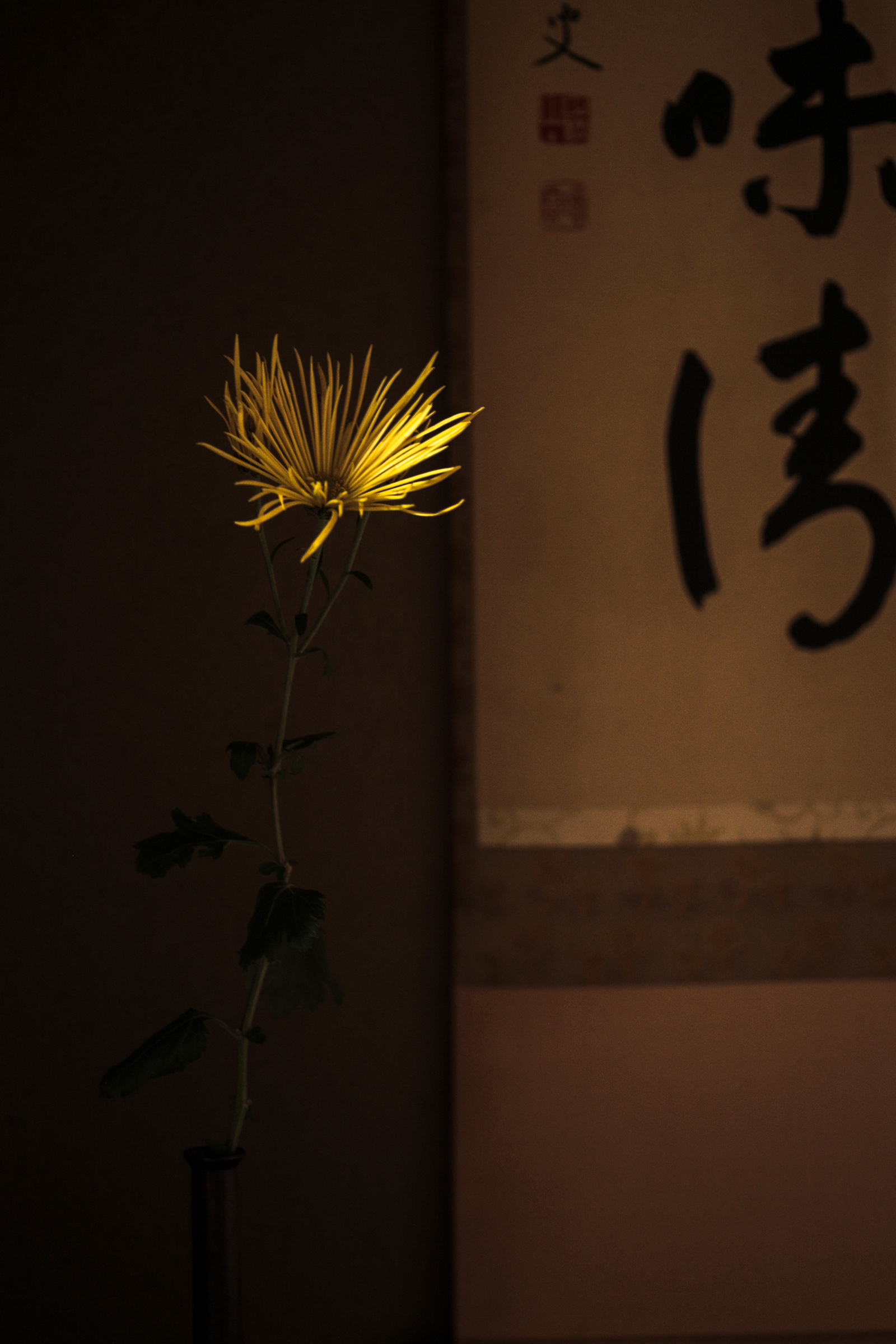 IMG_8560.jpg