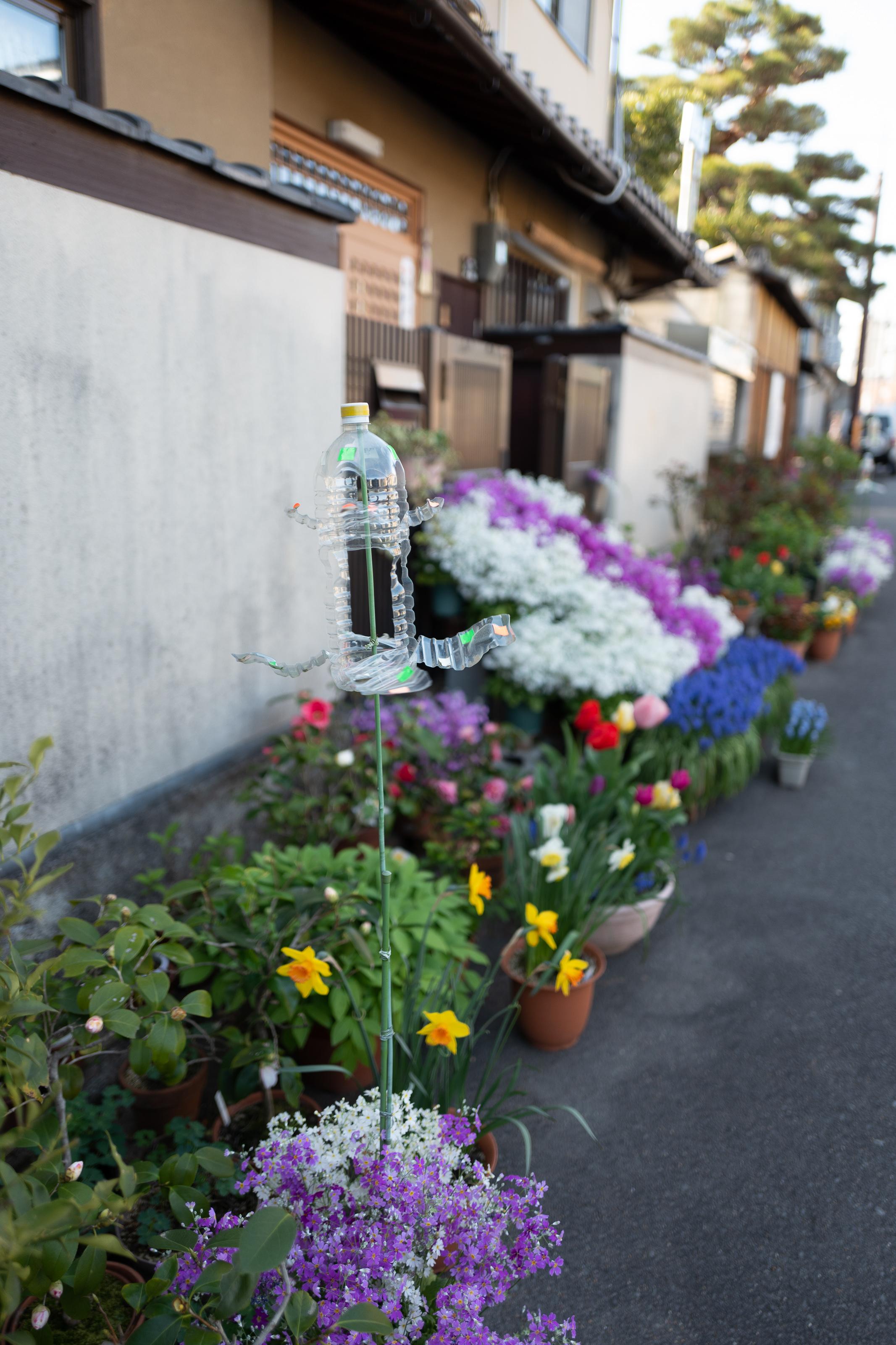 Flowers on the way to the Imamiya Shrine