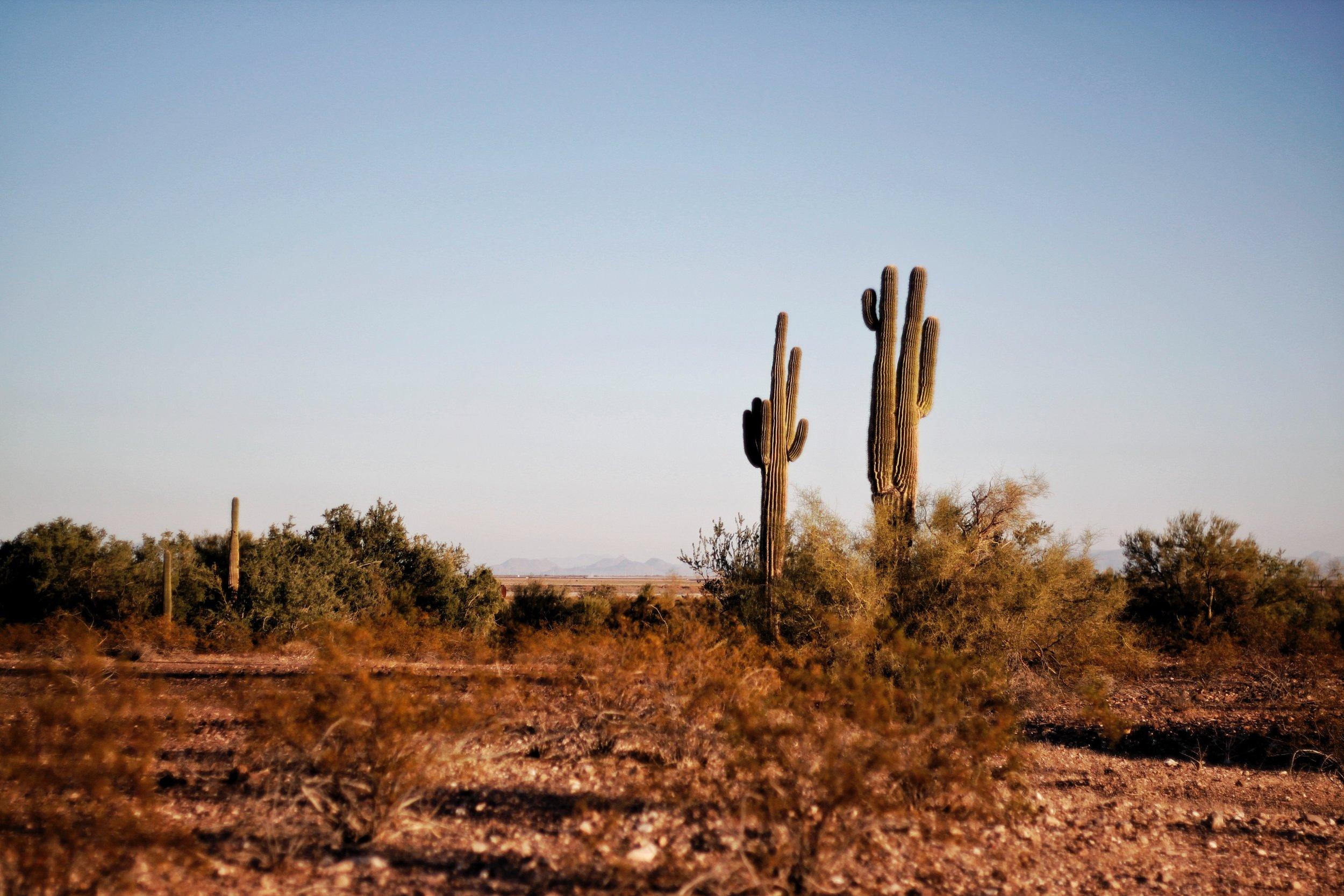 arid-arizona-cacti-764998.jpg