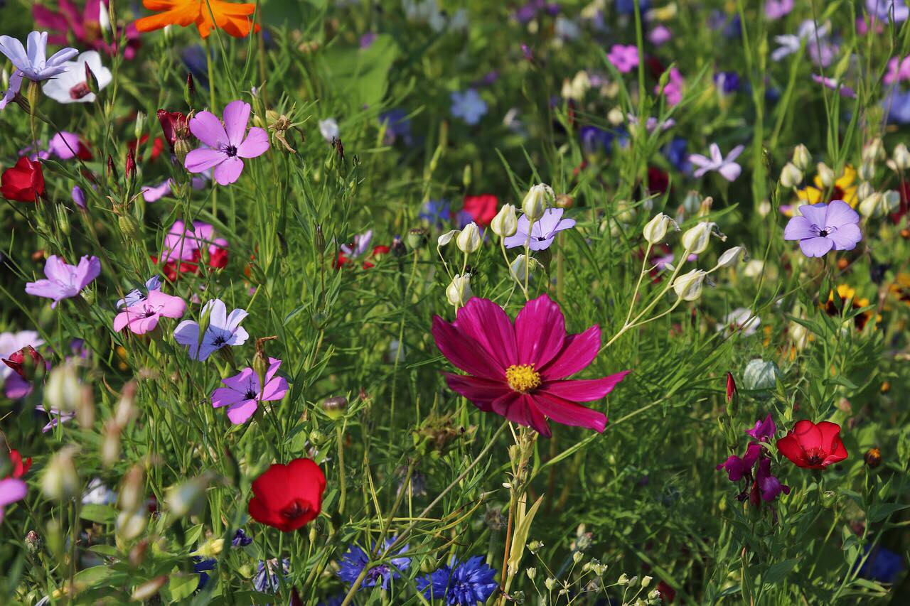 Who wouldn't love to receive a beautiful bouquet of wildflowers? Thoughtful doesn't have to be expensive.