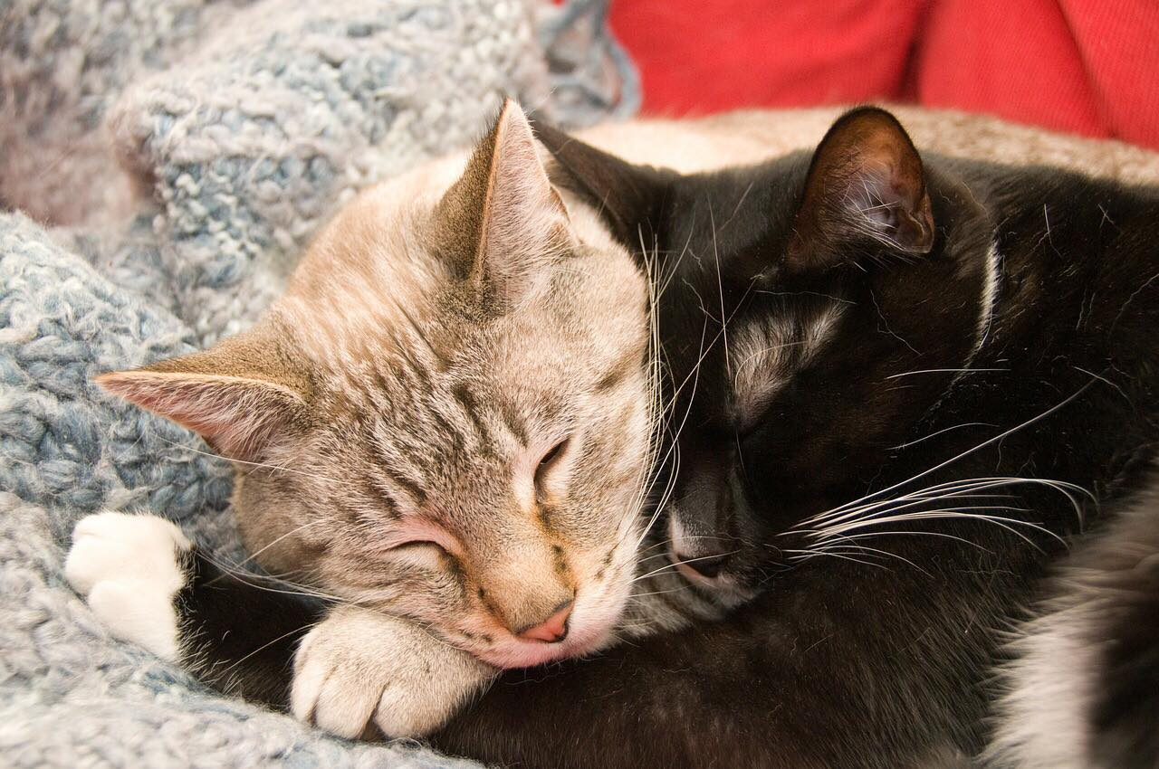 Cats are cuddle experts. Maybe we could learn something about Physical Touch from them!