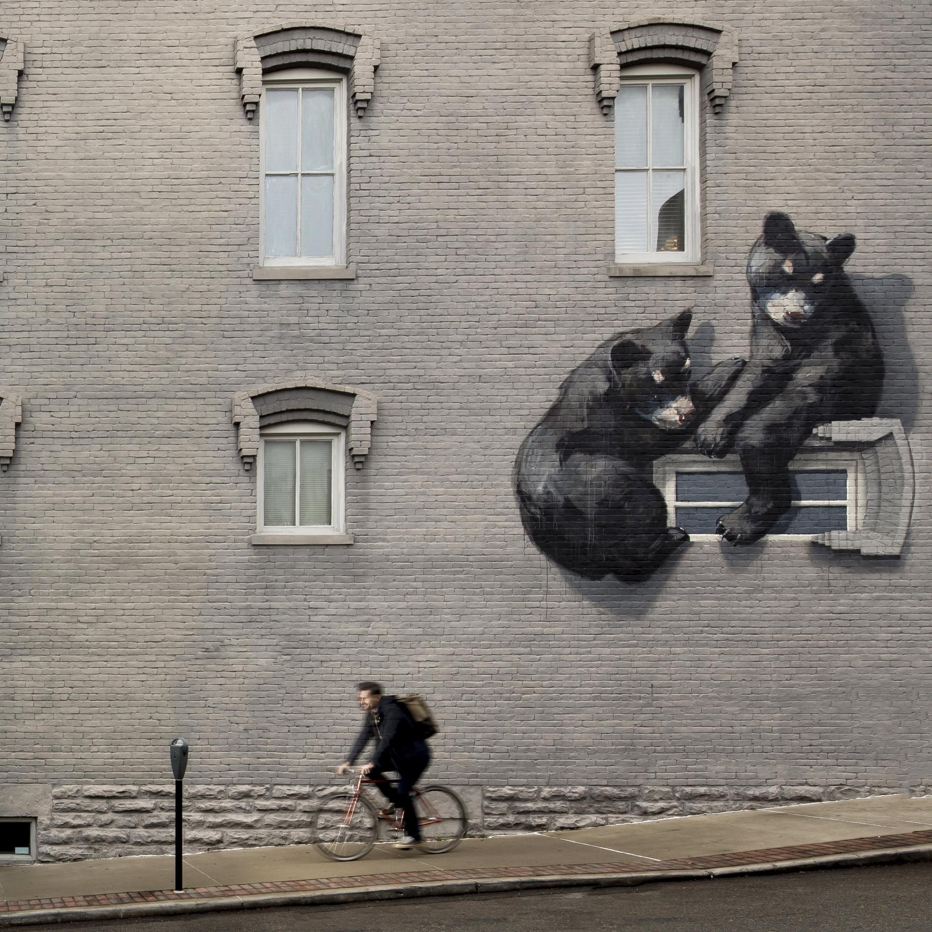 Bear-Bike.jpg