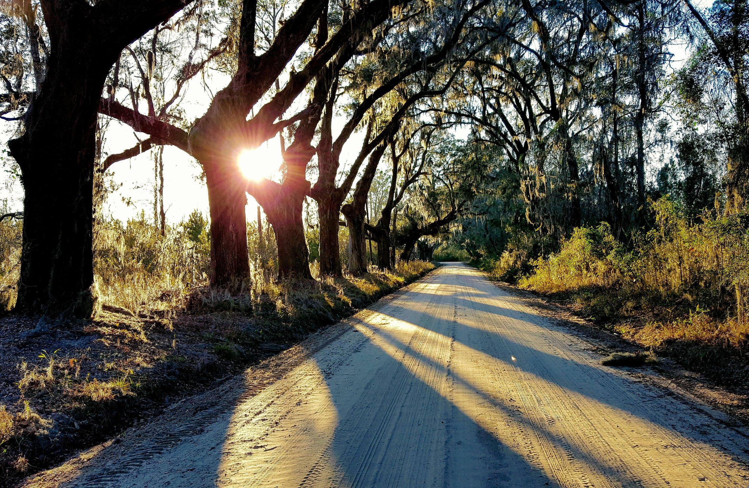 Waylon McKinnon Dirt Road2.jpg