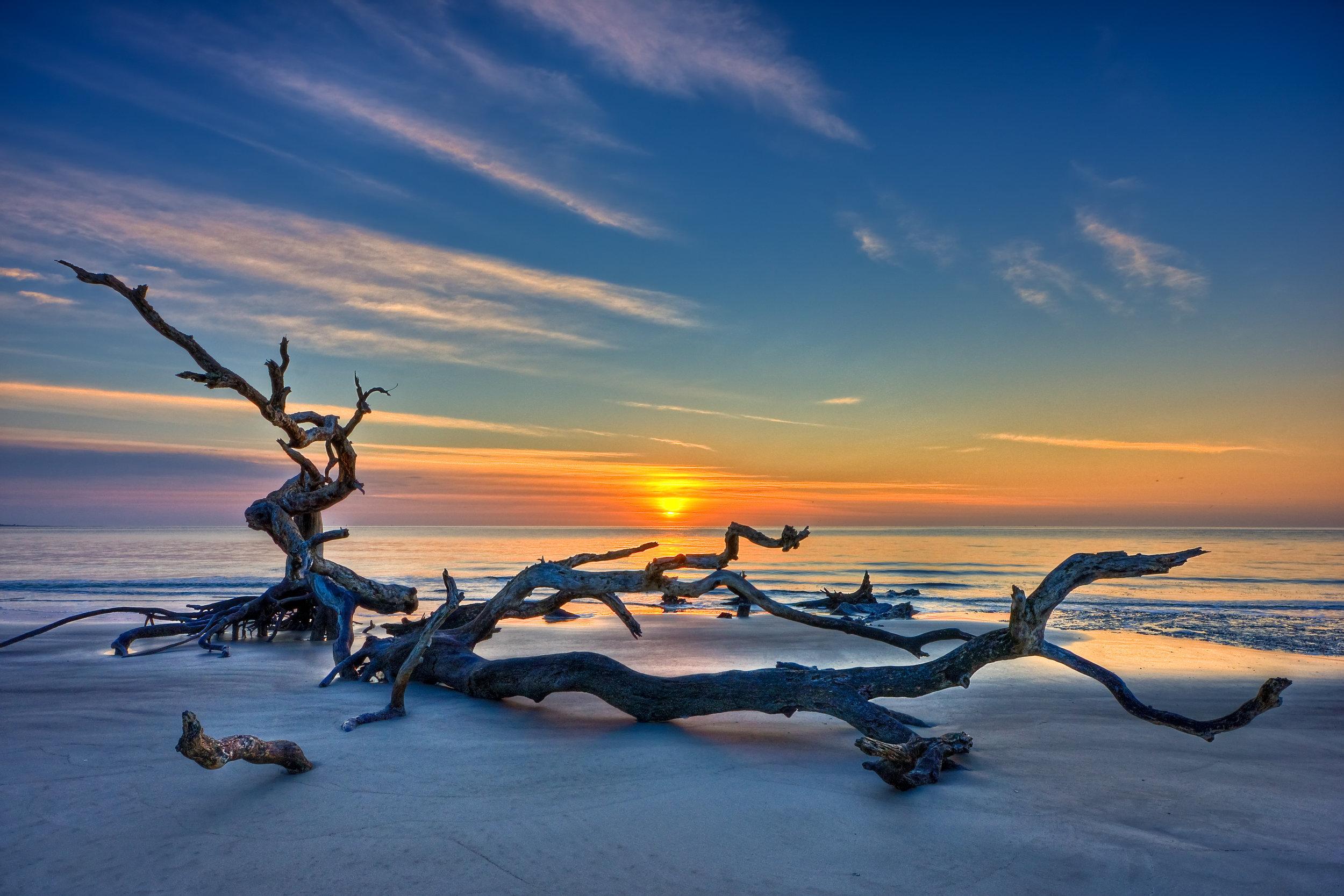 Driftwood Golden Isles.jpg
