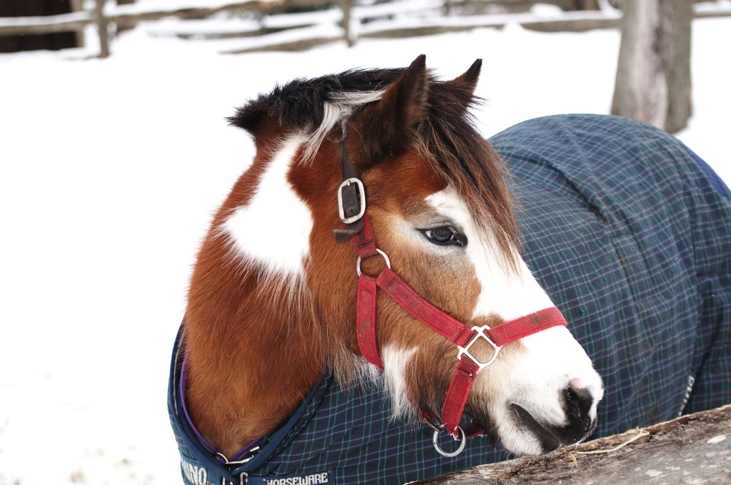 small pony snow pic.jpg