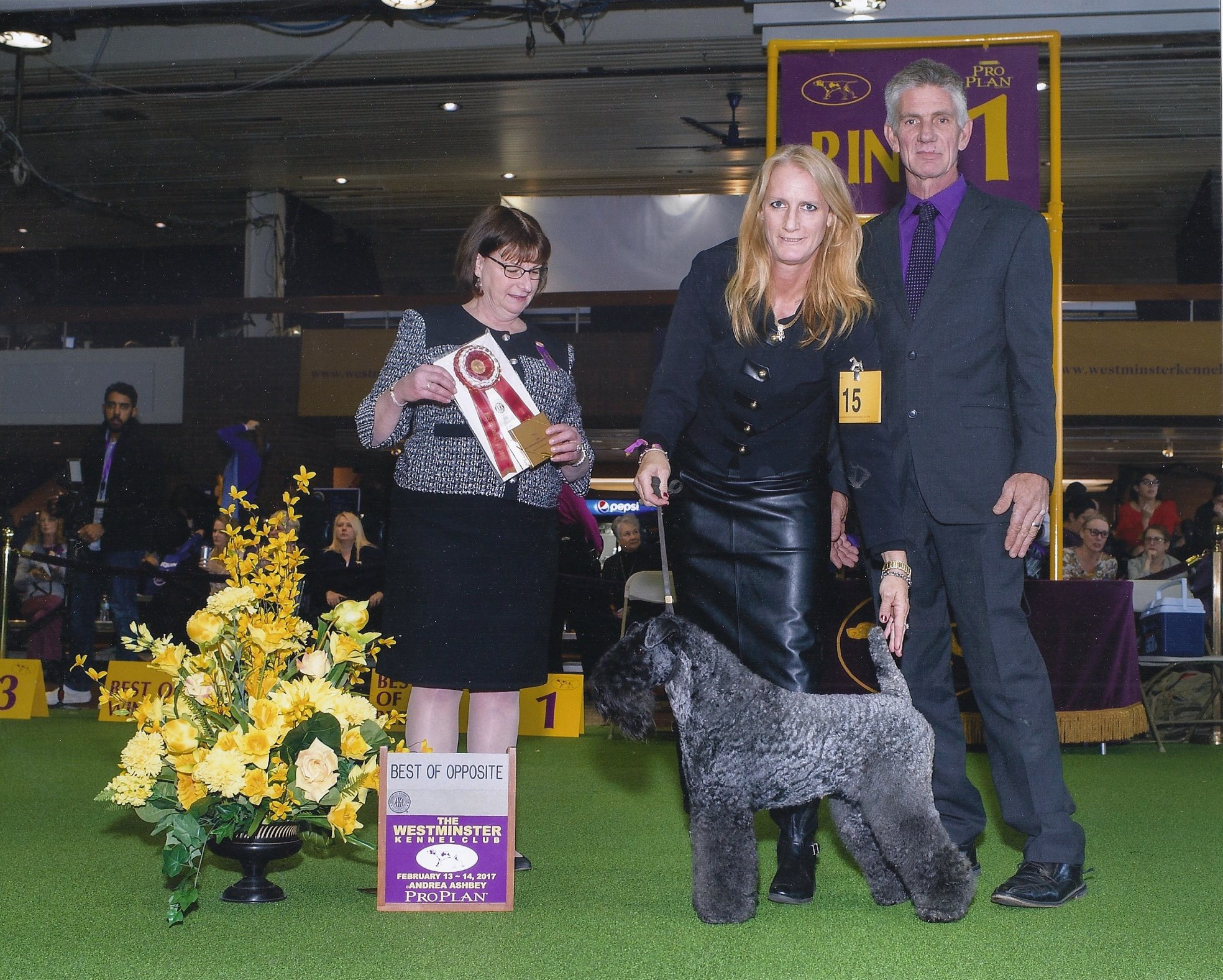 Diamonds are Forever Best Opposite Westminster Kennel Show 2017.jpg