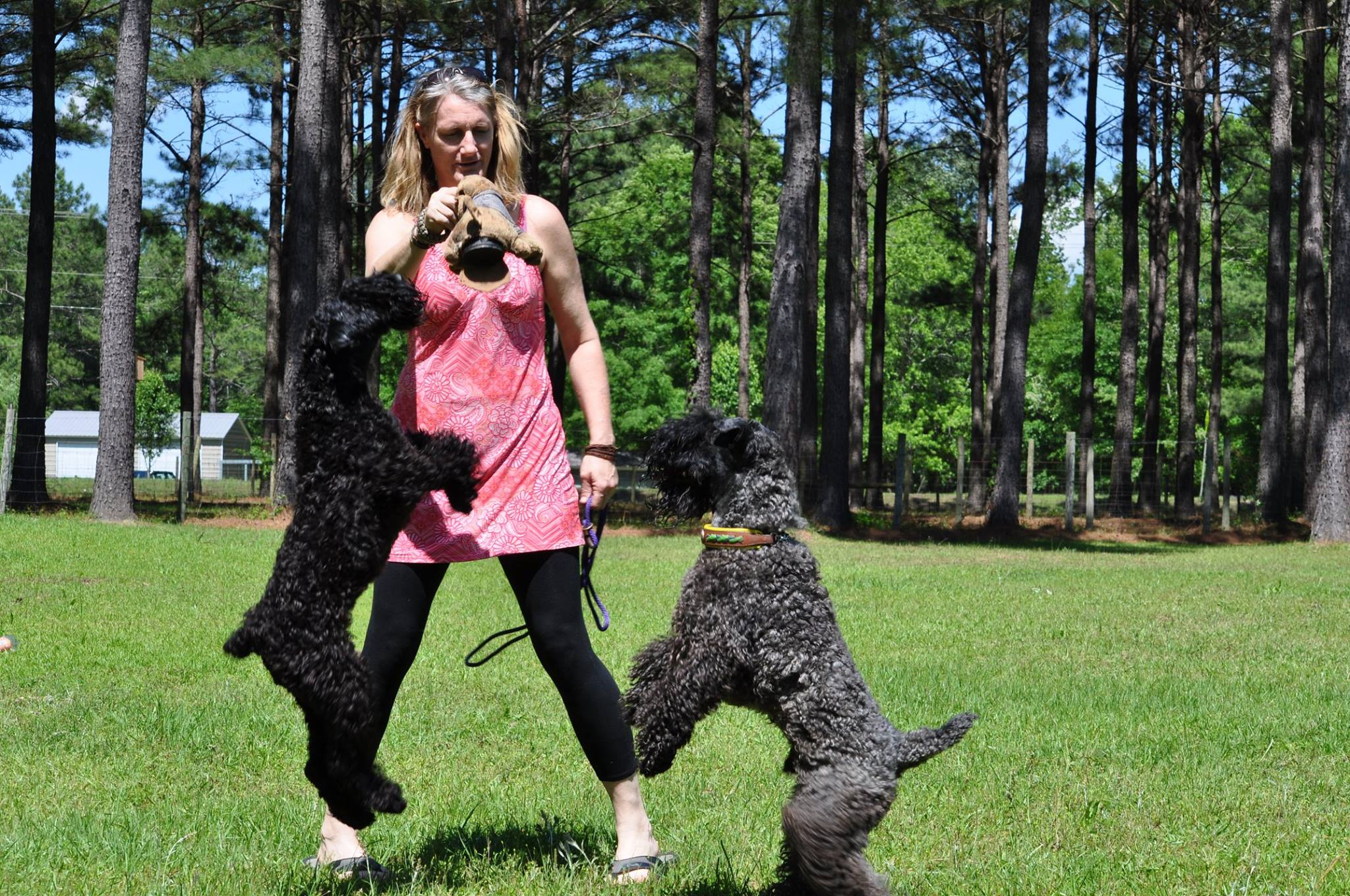 Tuesday Hanna and her dogs at play.jpg