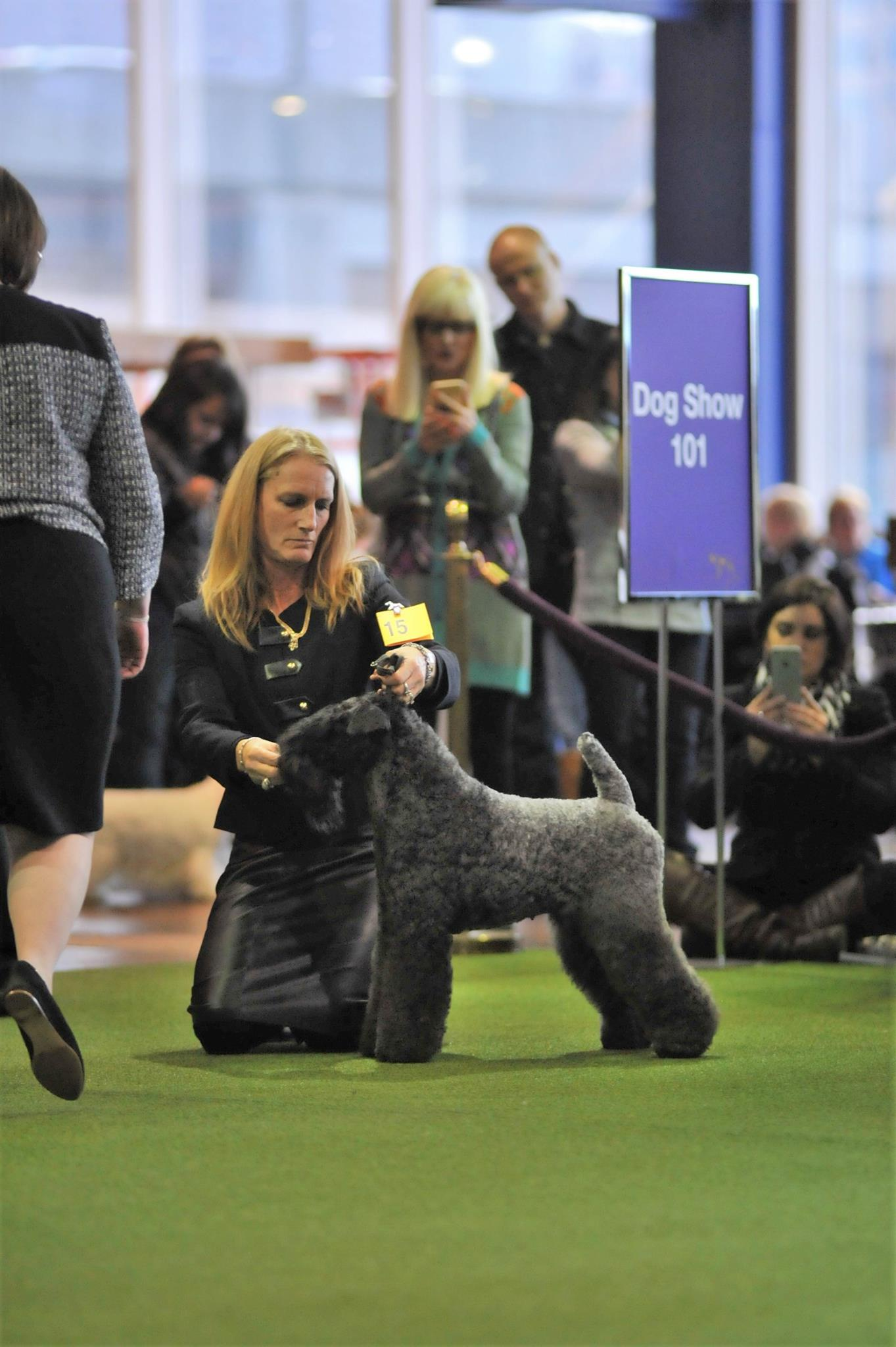 Tuesday and Diamond at Westminster 2017.jpg