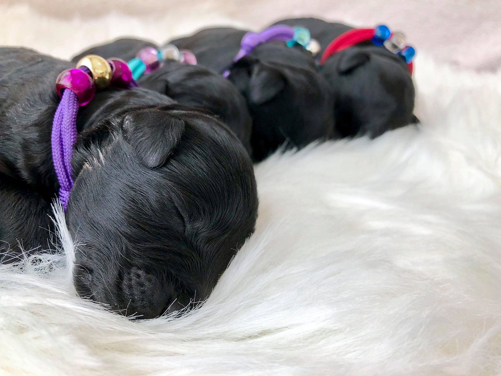 Diamond - Nemo pups Low Country Kennels F
