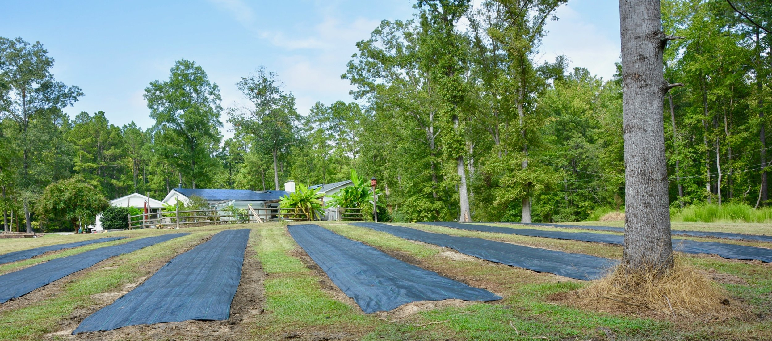 Perennial Beds are Ready for Planting -