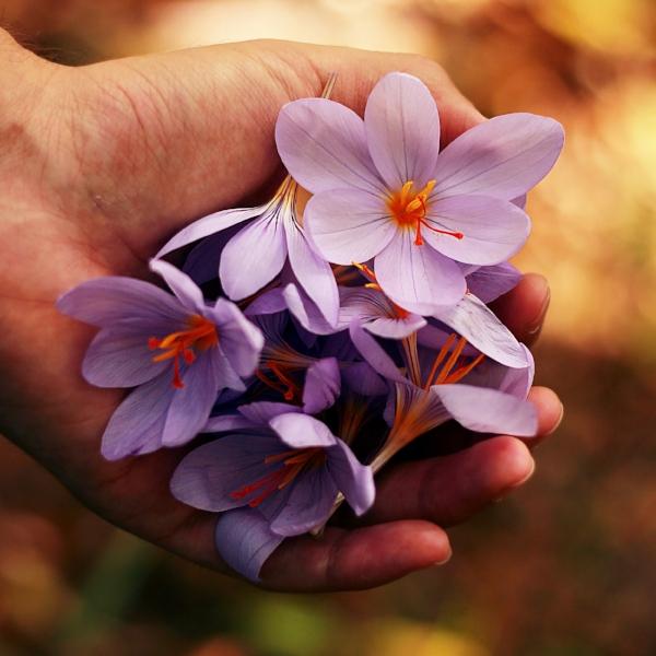 hands holding flowers - roberta-sorge-152287-unsplash.jpg