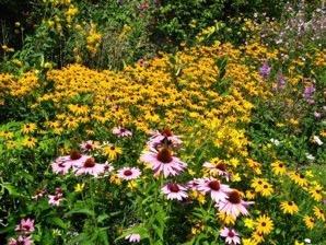wildflowers4.jpg