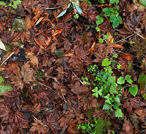 forest_floor_eaglenest.jpg