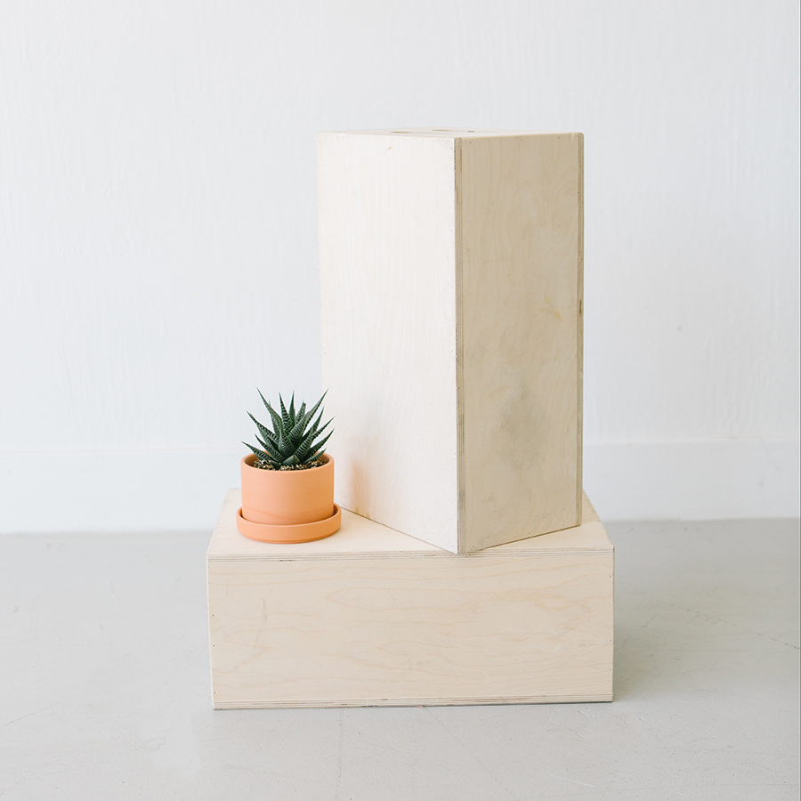 cactus in tericotta pot on photography apple boxes in natural light studio in pleasanton ca.jpg