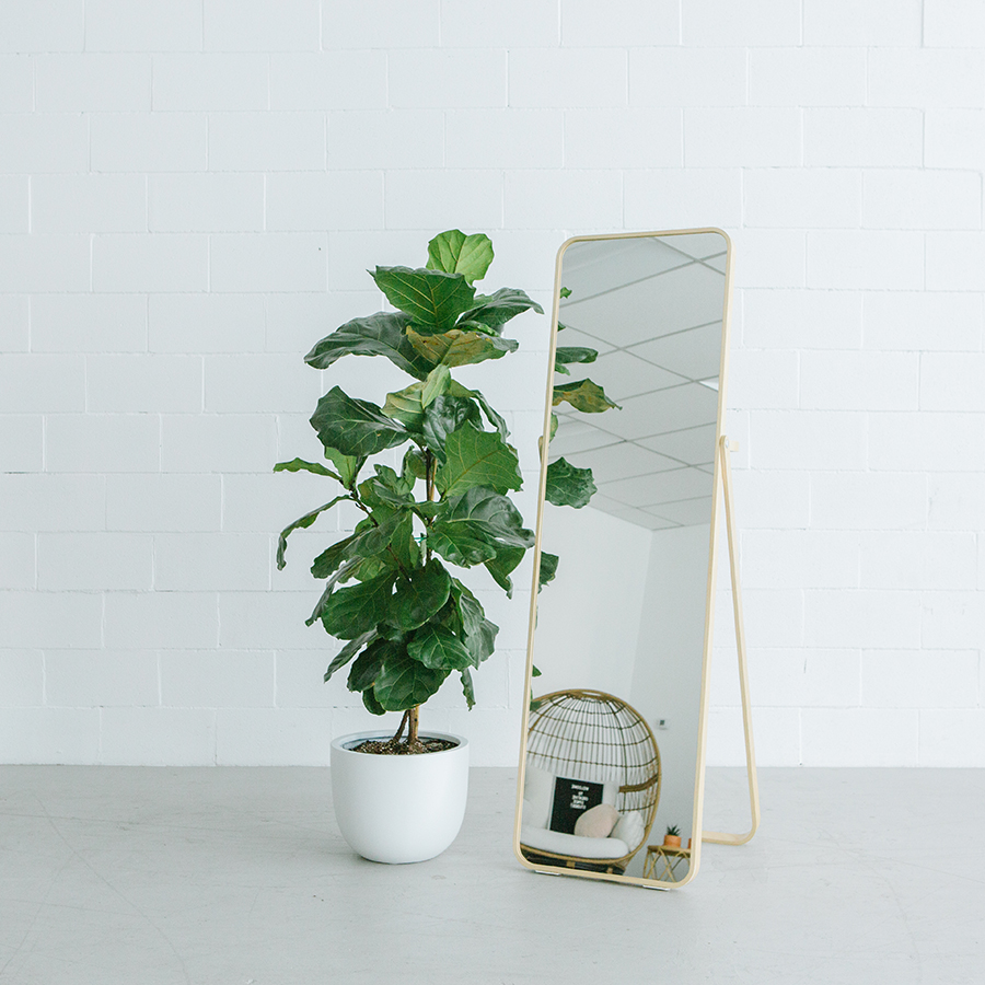 full length mirror with fiddle leaf tree in front of a white brick wall in a natural light studio in dublin ca.jpg