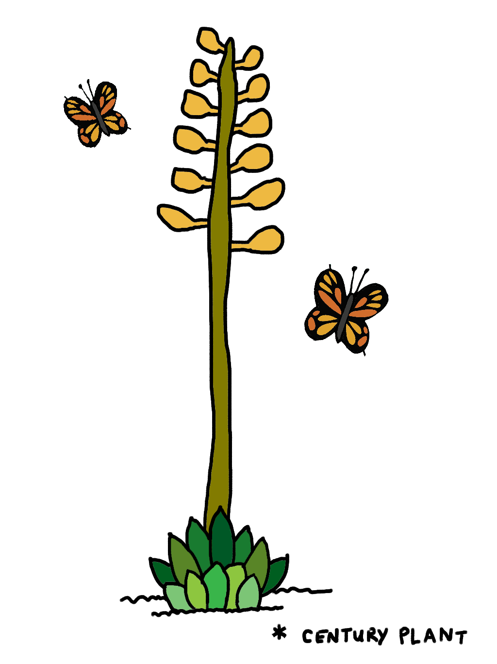 Plant_03.png