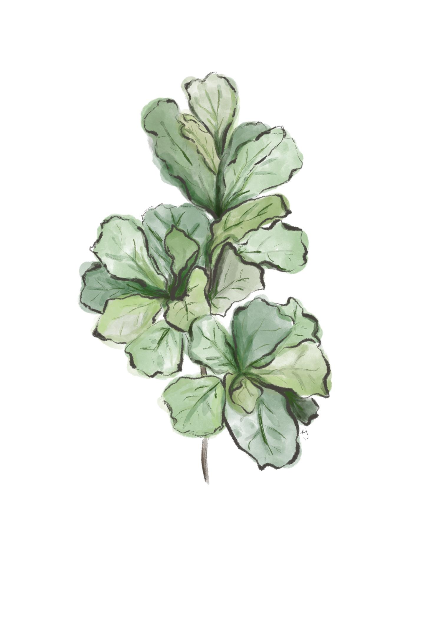 Fiddle_Leaf.JPG