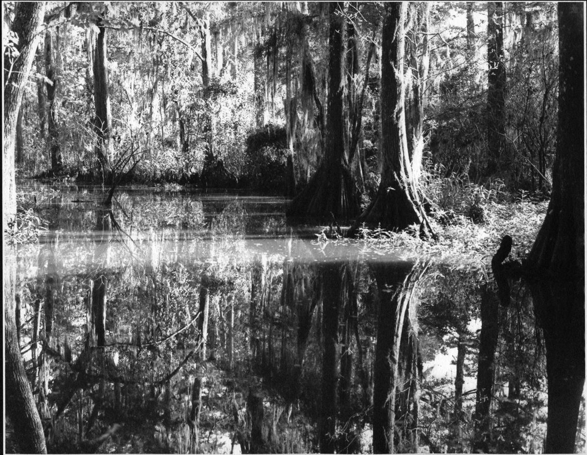 Honey Island Swamp #7