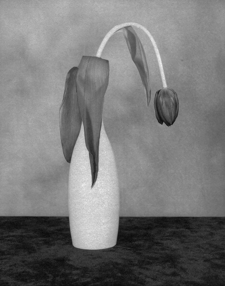 Flower Series #142