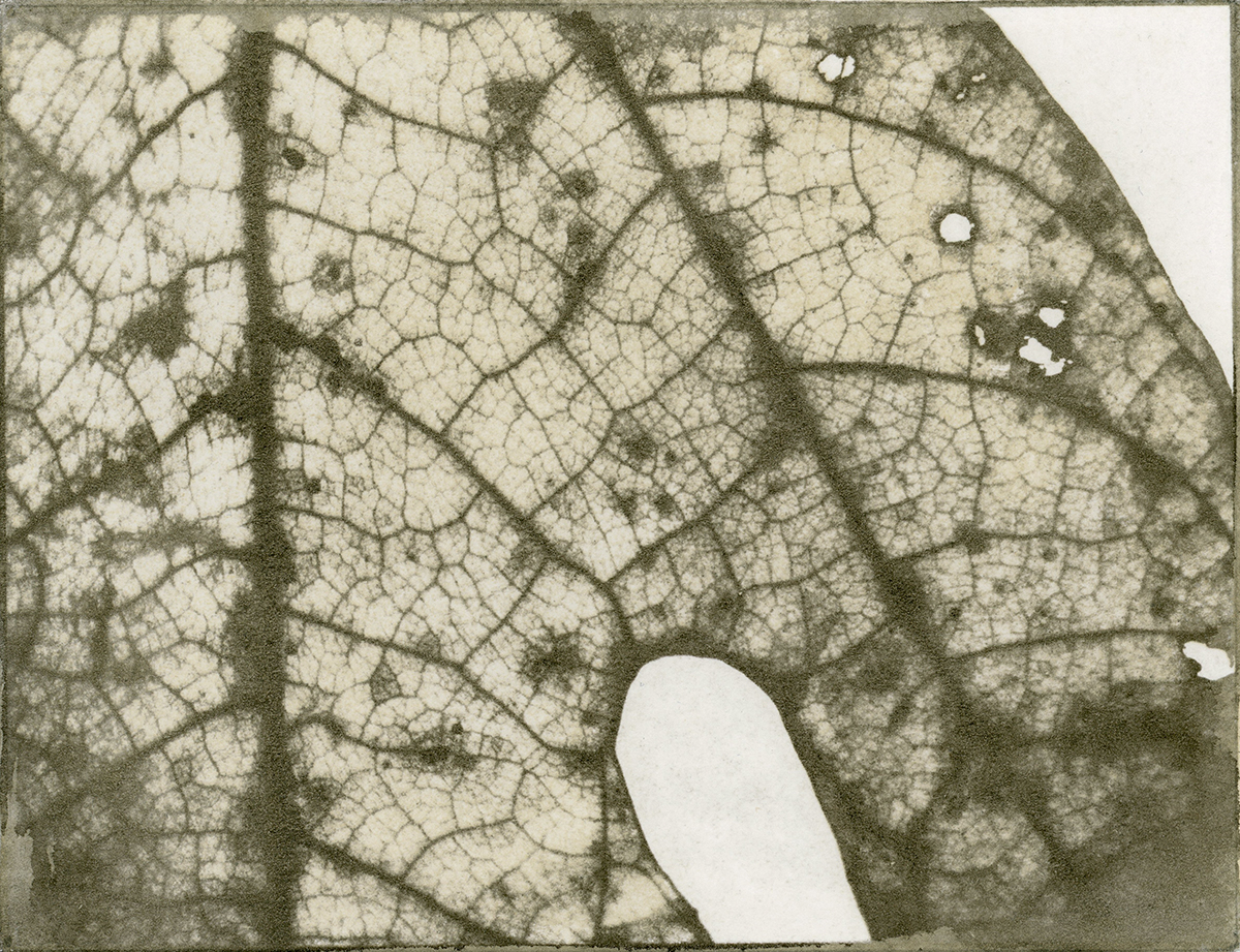 Peter Frandsen  gum bichromate print  4 1/2 x 6 inches  NFS  frandsen_peter_3, entry #257