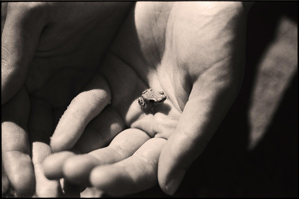 Hands & Toad
