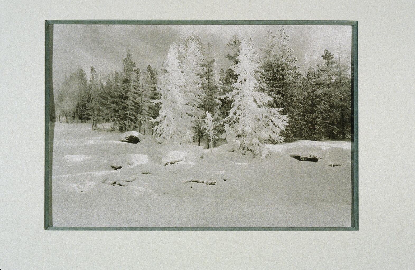 Faery Trees, Yellowstone