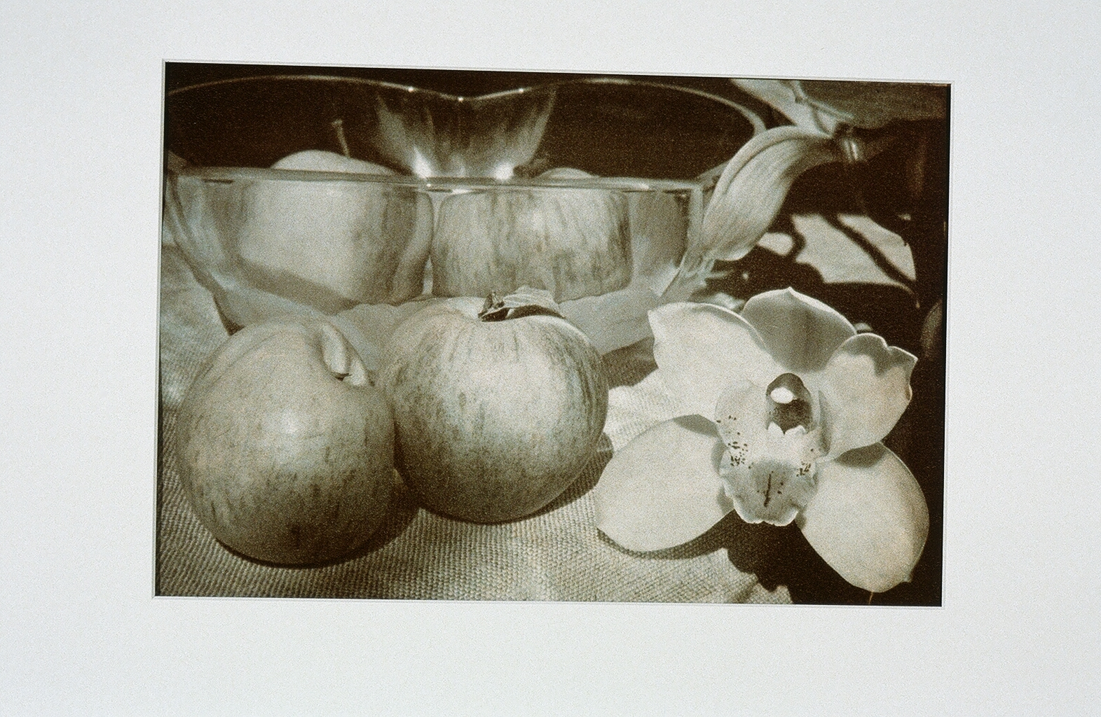 Apples & Cymbidium