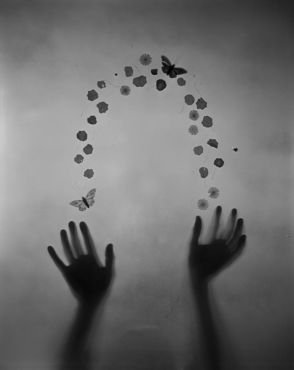 untitled (petal arc)
