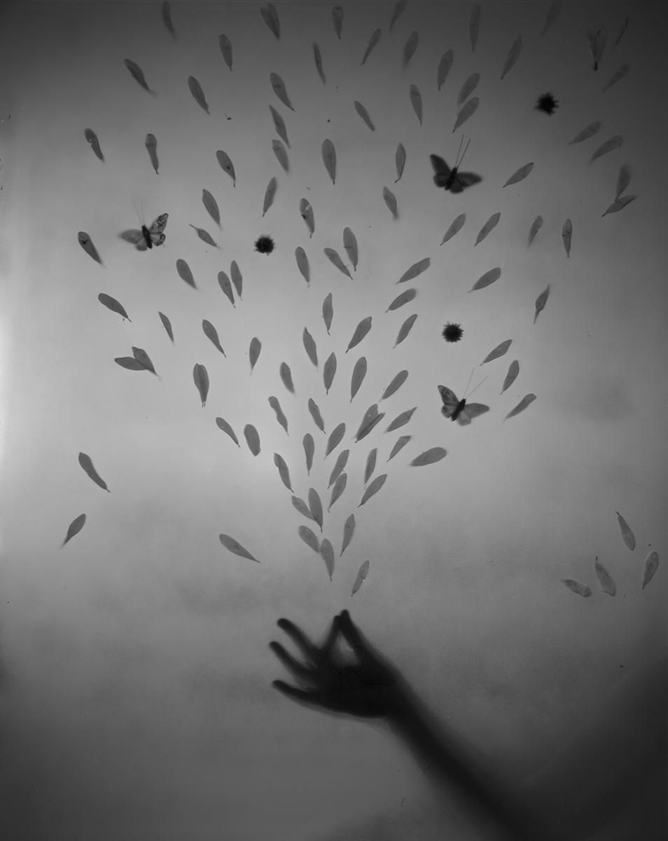 untitled (daisy petals)